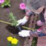 花壇の鉢植えをしました!
